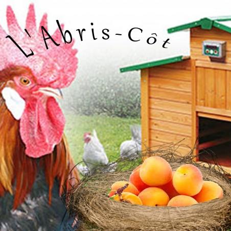 """Concentré DIY """"L'Abris-Côt"""" 30ml"""